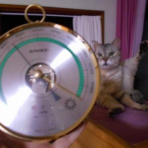 台風の日のお猫さま