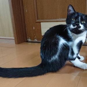 徳島の猫さんは、シッポが長い!