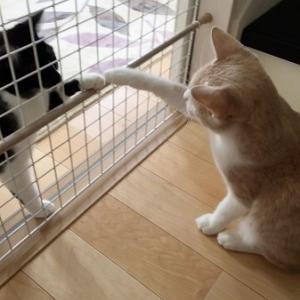 仔猫ちゃんに応募が少ないなんて・・・