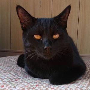 黒猫のくう君、オッサン顔に成長!