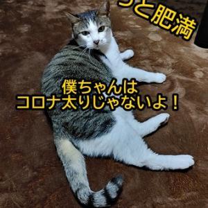 コロナ太り、解消ならず!!