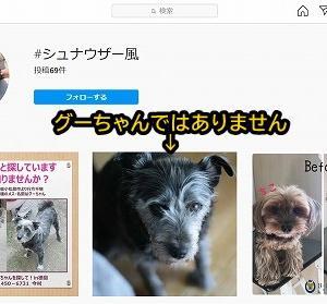 インスタの中にもグーちゃんのソックリさんが!!