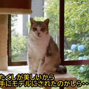 耳カットの猫さんがモデル?