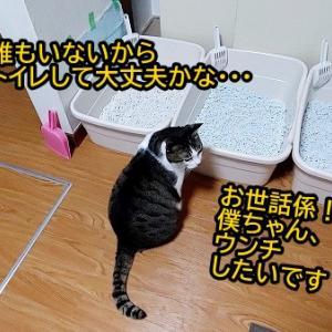 太郎坊ちゃまは仕返しが怖い・・・