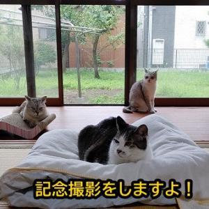 お猫さまとマッタリしていていいのか・・・