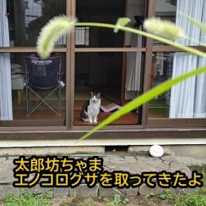 猫ねこ天気予報!!