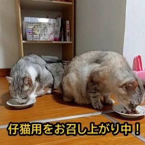 母・銀子ママの食欲は旺盛!