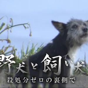テレビに出ていた野犬さんはグーちゃんではありません!