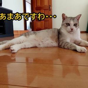 銀子ママ、カリカリよりウエットを欲しがる!!