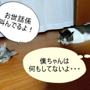 真夏の夜の惨事!!
