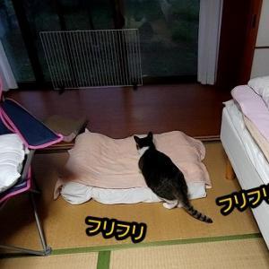 猫パトの季節になったのか?