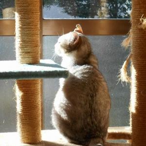 日向で瞑想中・・・