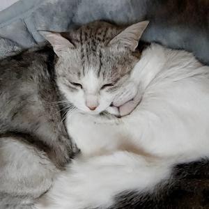 お猫さまも夢を見るのかな?