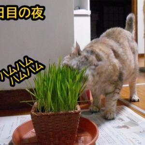 猫草パーティー2日目!