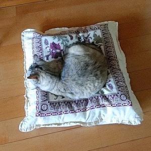 羽毛布団をお猫さまベッドに!