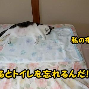太郎の頻尿は止まらず・・・涙