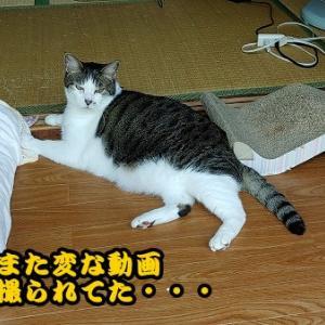 猫はよく寝るから寝る子で、ネコ!