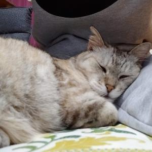 股の間で寝るのが好き!