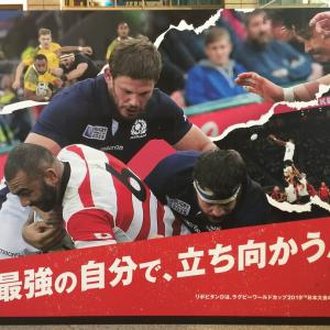 ラグビーのカンタベリーの服着て日本応援でちゅ~!
