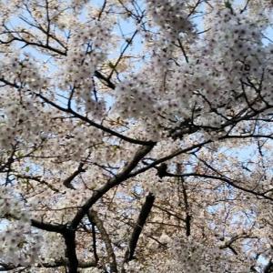 4/12 ミャンマー情勢~ネット上に亡命政権 φ(..)メモメモ