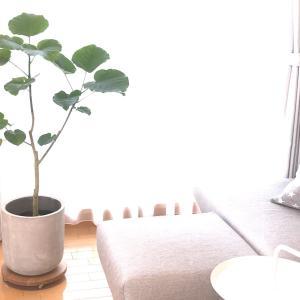 観葉植物用にキャスター付きの台を購入したら…移動も水やりもストレスフリーに