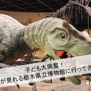 子ども大興奮!恐竜が見れる栃木県立博物館に行ってきた!【展示物の写真あり】