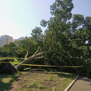 台風一過の山下公園