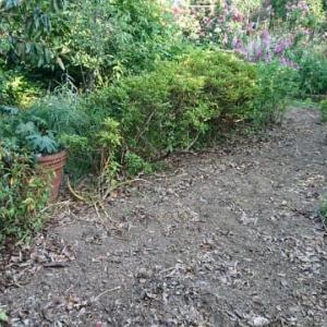 一年草から宿根草を主とした花壇に変えようかな。