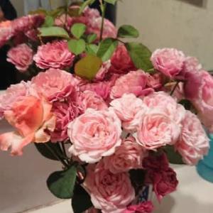 摘蕾してバラの夏休みに。