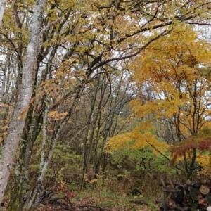 八ヶ岳麓の秋