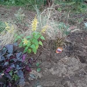 やっと庭仕事ができる!ガーデンを広げよう。