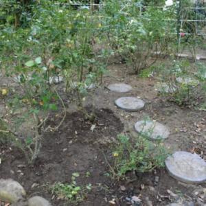 バラを植え替えて庭の改造