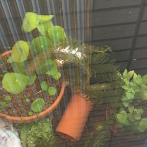 【緑の絨毯】メダカの越冬に向けて新しいビオトープを立ち上げてみました(^ ^)