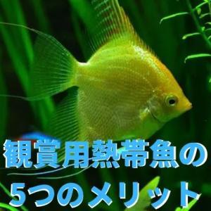 おしゃれな趣味!観賞用熱帯魚の5つのメリット
