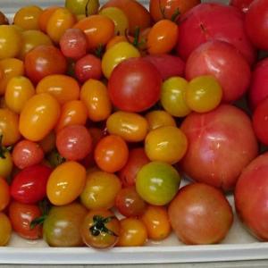 そろそろ終わりにしたいトマト