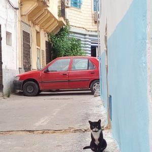 2019年チュニジア・トルコ・イタリア旅行記(2)~チュニス2日目・猫とスーク編~