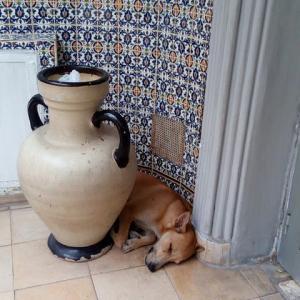 2019年チュニジア・トルコ・イタリア旅行記(2)~チュニス2日目最終・酒とカタルシス編~