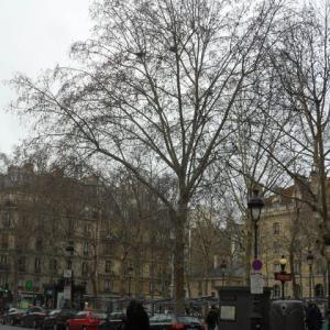 2013年1月末のパリ・ナンテールへの旅~パリ観光(2)モンマルトル墓地の猫編~