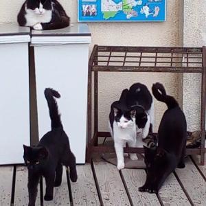 2018年10月宮城県田代島への旅~島で猫三昧編(2日目①)~そして在ヨルダン英国大使館の猫