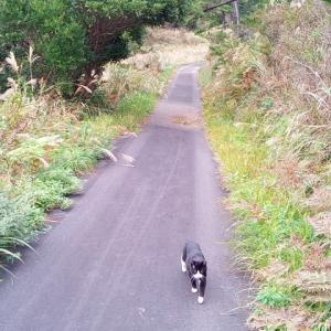 2018年10月宮城県田代島への旅~島で猫三昧編(2日目②)~そしてイスタンブールのキャットウォーク猫