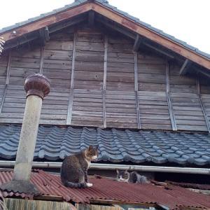 2018年10月宮城県田代島への旅~島で猫三昧編(2日目③)~そしてトルコの猫ピアニスト
