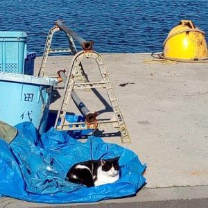 2018年10月宮城県田代島への旅~島で猫三昧編(3日目の最終日)~そしてイスタンブールの猫好きイマーム