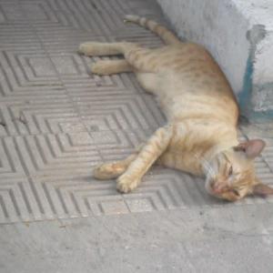 エジプト・カイロ滞在記・2010年3月末~2010年9月末(1)