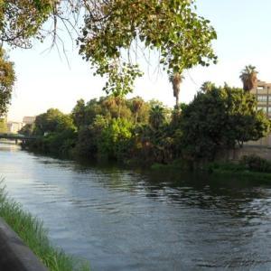 エジプト・カイロ滞在記・2010年3月末~2010年9月末(2)~猫やナイル川など