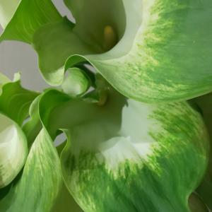 健康的で安らぎや自然、平和をイメージさせる緑
