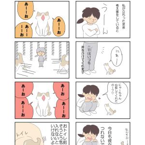 【四コマ漫画】愛猫はキジシロっていうのかー