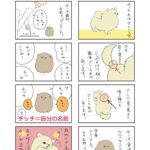 【四コマ漫画】愛犬チノを描きたくて