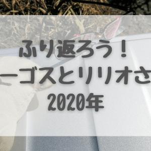 ピンチをチャンスに!?リリオさん、2020年をふり返る