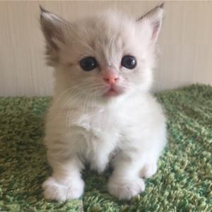 ママより美猫!