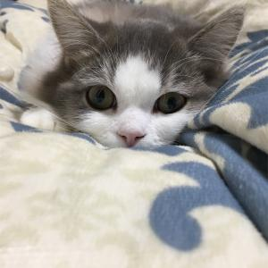 おしどり猫